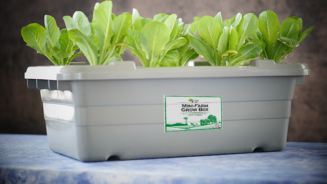 Mini-Farm Grow Box